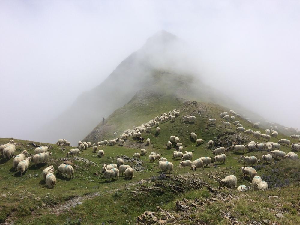 Montagnon-Pyrenees-4